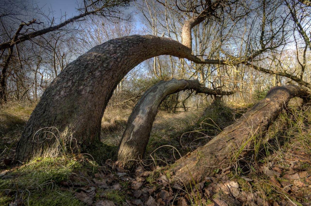 """Wanderung im Nationalpark Niedersächsisches Wattenmeer auch den Inselwald """"Greene Stee"""" von Borkum mit den Borkumer Originalen der Watthanse"""