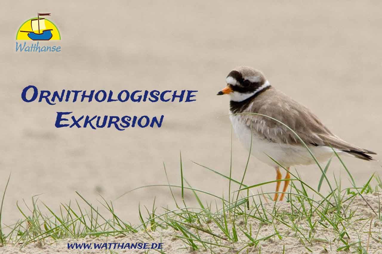 Ornithologische Exkursion im Nationalpark Wattenmeer mit den Borkumer Originalen der Watthanse
