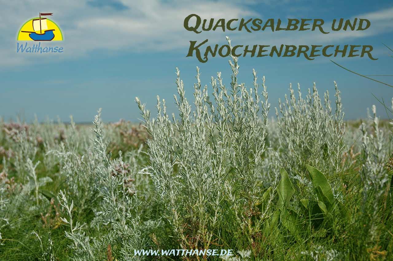 Naturführung - Heilkräuter, Quacksalber und Knochenbrecher - historische Volksheilkunde