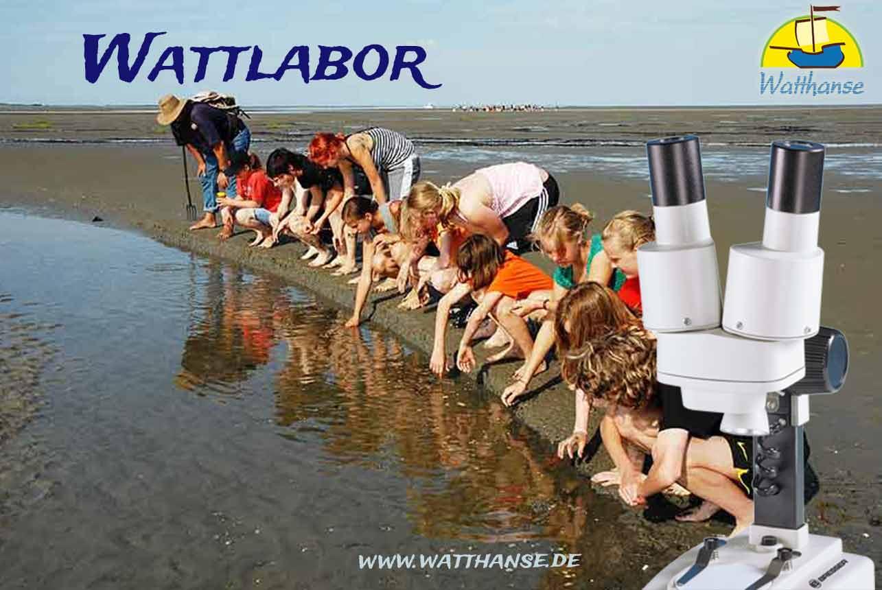 Wattwanderung 2.0 auf Borkum ins Wattenmeer mit dem Mikroskop
